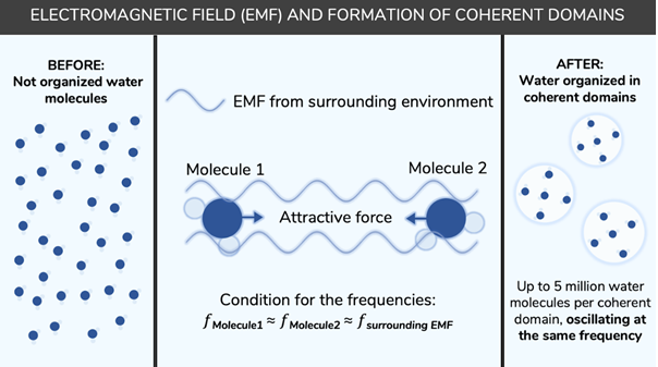 EMF coherence field formation