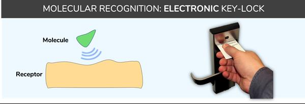 Molecular recognition - lock-key system